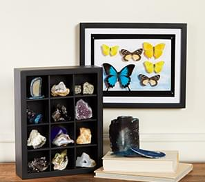 Shadow Boxes & Display Cases