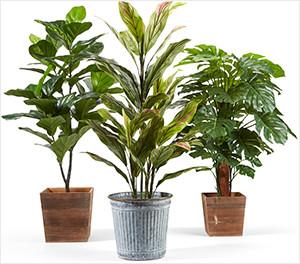 Spring Trees & Floor Plants