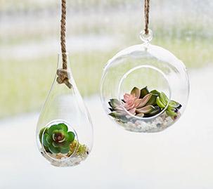 Hanging Succulent Terrariums