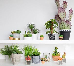 Painted Pattern Cactus Pots