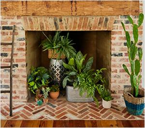 Summer Trees & Floor Plants